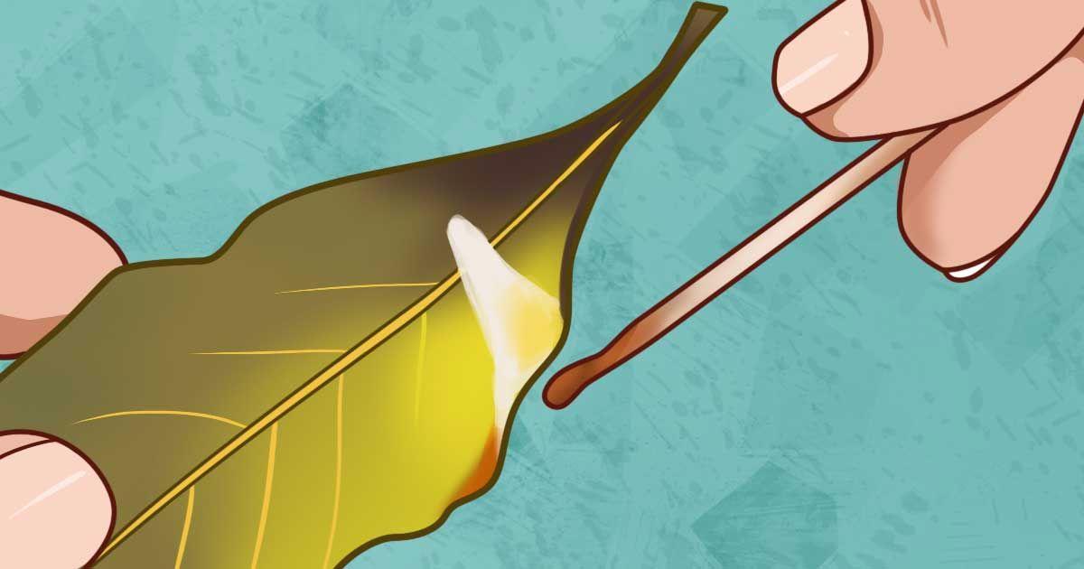 Quema hojas de laurel en tu hogar y verás lo que pasa en sólo 10 minutos!