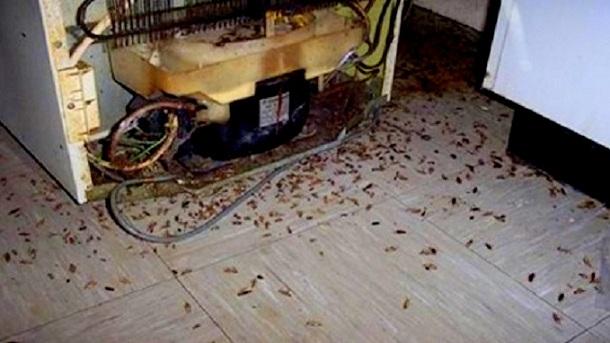 Mira como matar las cucarachas de la casa. Estoy Sorprendida