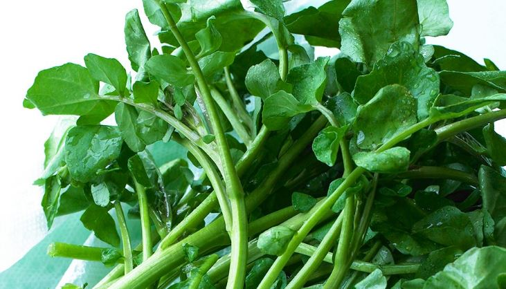 El vegetal más saludable del mundo y nos hemos olvidado por completo de él