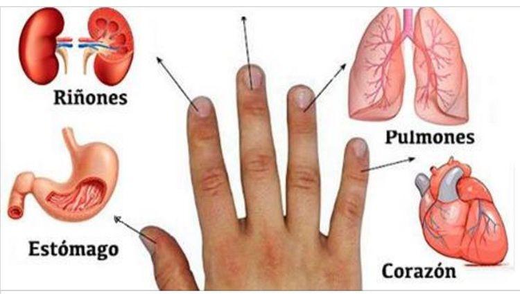 Cada dedo está conectado con 2 órganos: método japonés de curación